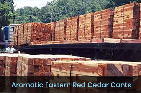 RED_CEDAR_CANTS-001
